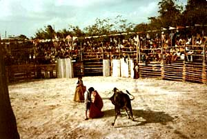 Bullfight on Cozumel!